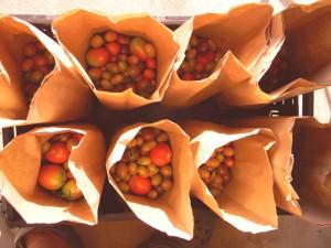Blackwood Land Tomatoes